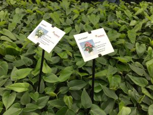 Generating customized labels for plant varieties